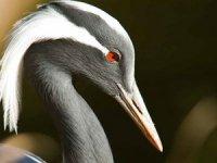 Avrupa'daki her 5 kuştan biri yok olma tehlikesinde