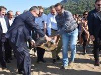 Tedavi edilen deniz kaplumbağaları denize bırakıldı