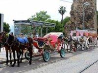 Antalya'da atlara eziyete son, akülü fayton isteniyor