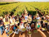 Alaşehir'in üzümü dünya markası