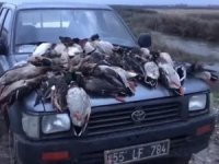 Kuş Cenneti'nde yeşilbaşlı ördek katliamı
