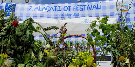 alacati-ot-festivali-6.jpg