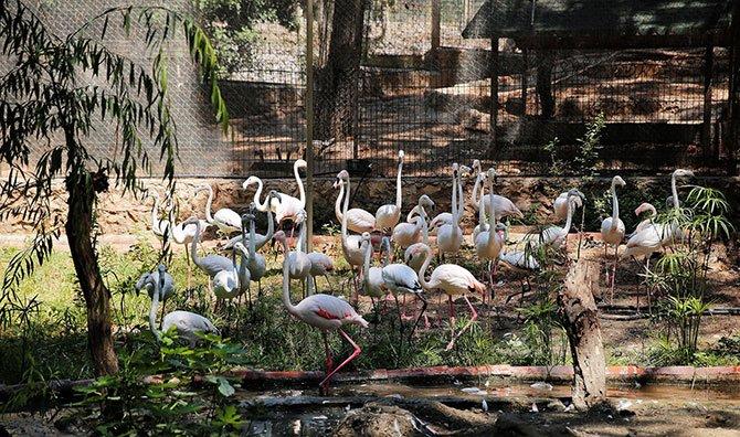antalya-da-21-flamingo-002.jpg