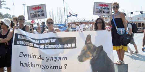bodrum-hayvan-haklari-protesto-2.20121001234534.jpg