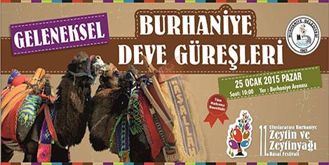 burhaniye-deve-3.jpg