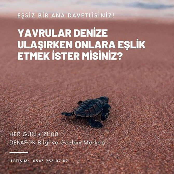 deniz-kaplumbagalari,-002.jpg