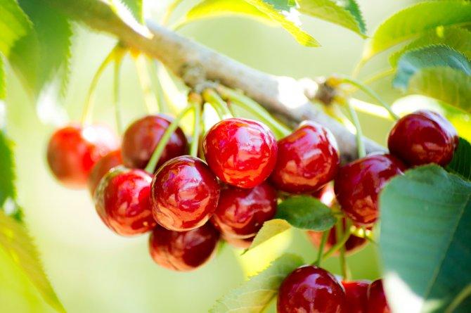 ege-yas-meyve-sebze-ihracatcilari-birlig-004.jpg