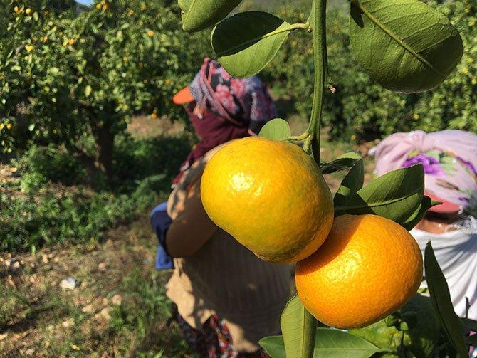 ege-yas-meyve-sebze-ihracatcilari-birligi--002.jpg