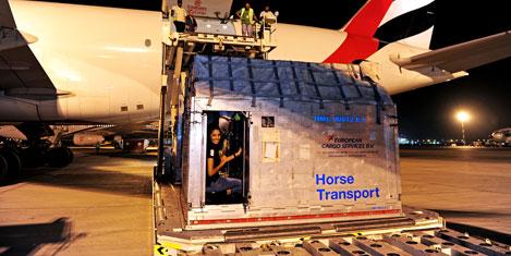 emirates-cargo-1.jpg