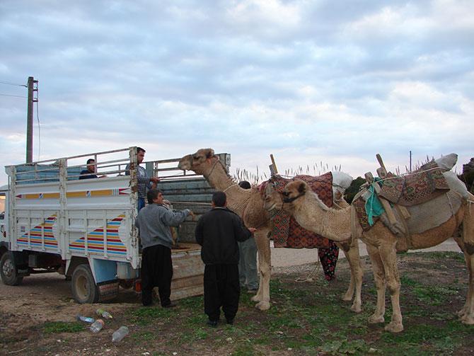 evde-bekleyen-develer,--003.jpg