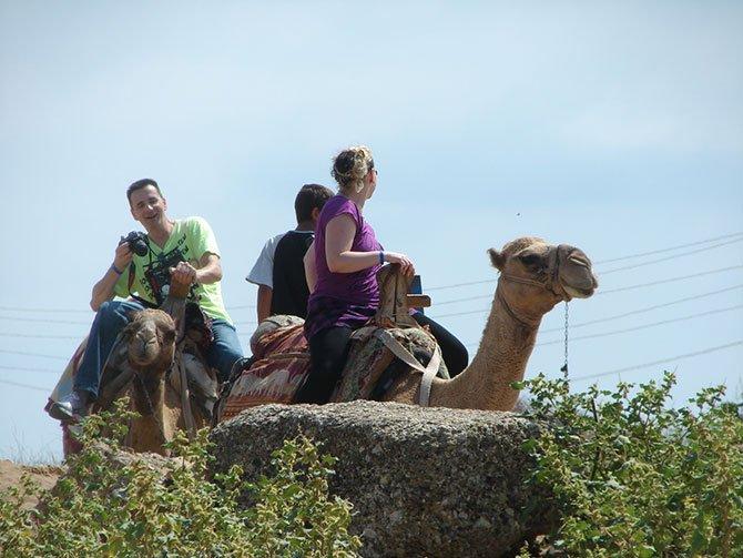 evde-bekleyen-develer,-.jpg
