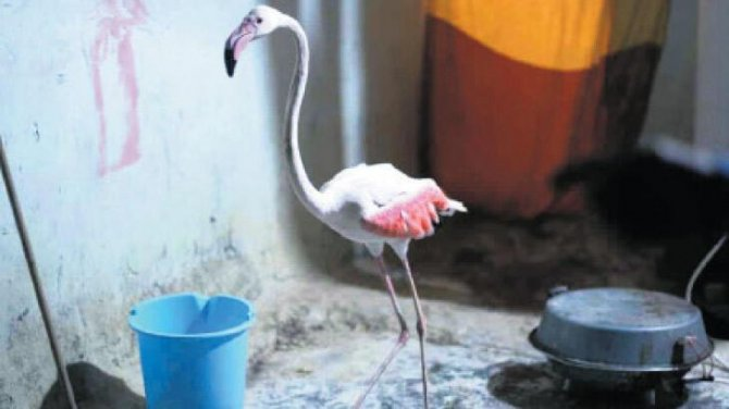 flamingo-001.jpg