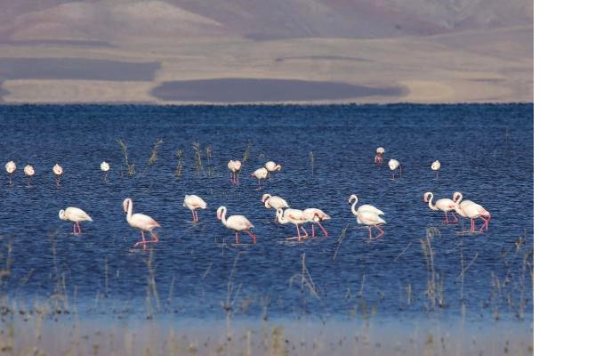 flamingo-festivali-.jpg