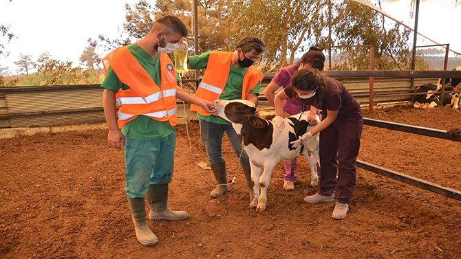 hayvanlar-tedavi-e-001.jpg