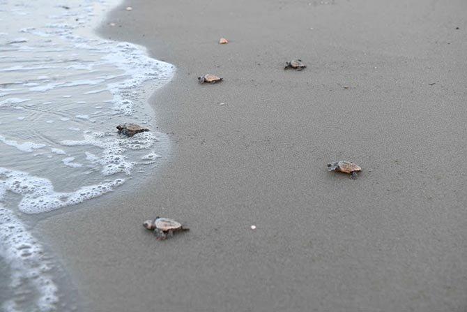 indigo-turtles-projesi--002.jpg