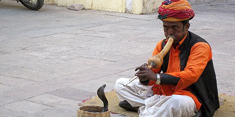 jaipur-city-hall-yilan-oynatan-4.jpg