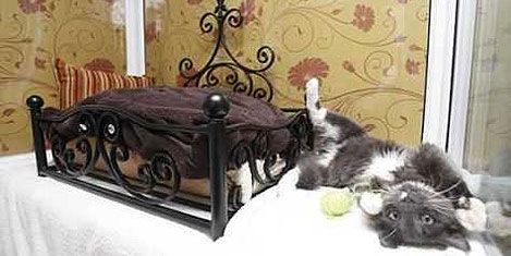 kedi-oteli-1.jpg