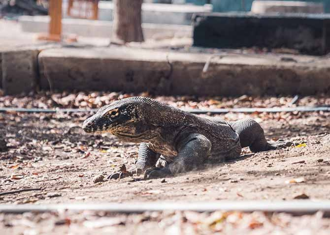 komodo-national-park-006.jpg