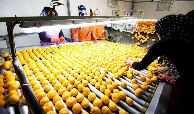 portakal-ilk-sirada.jpg
