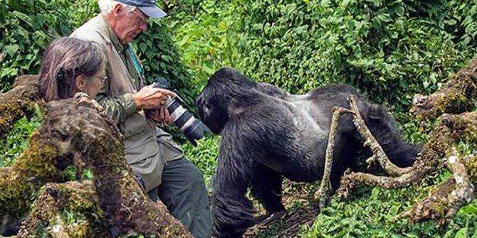 ruanda-gorilla-001.jpg