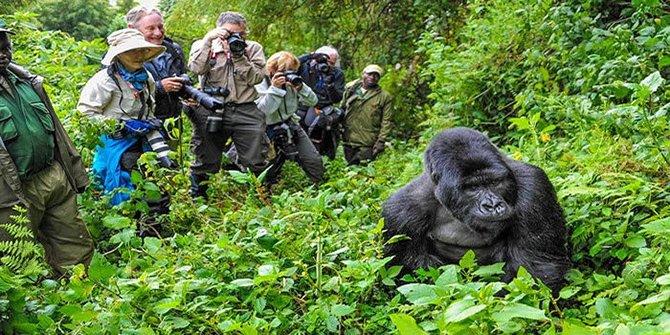ruanda-gorilla.jpg