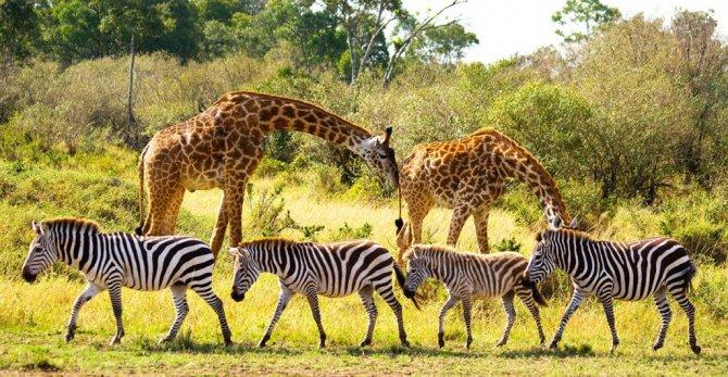 tiktok,-afrika'daki-yaban-hayatin.jpg