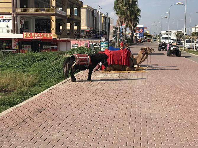 turkiyeye-turist-005.jpg