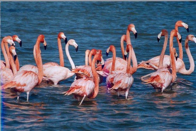 tuz-golu-flamingo-004.jpg