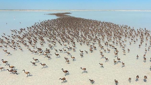 tuz-golu-flamingo-005.jpg