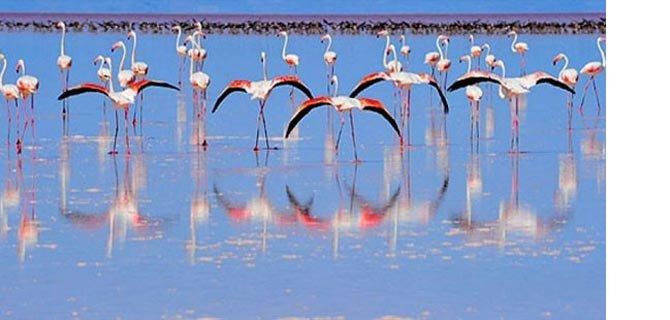 tuz-golu-flamingo.Jpeg