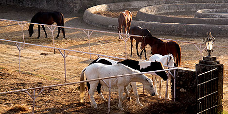 udaipur-sikarbadi-atlar1.20120208005440.jpg