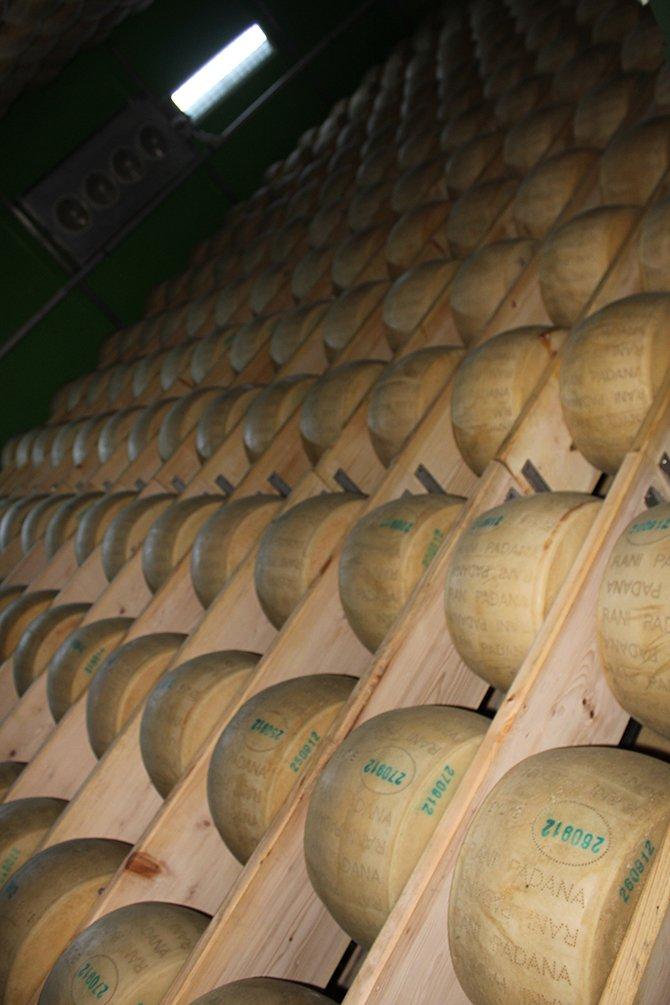 yilmaz-sezer-peynir-005.jpg