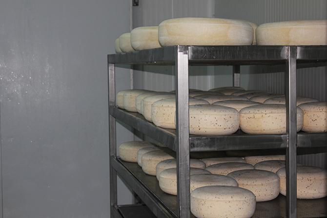 yilmaz-sezer-peynir-006.jpg