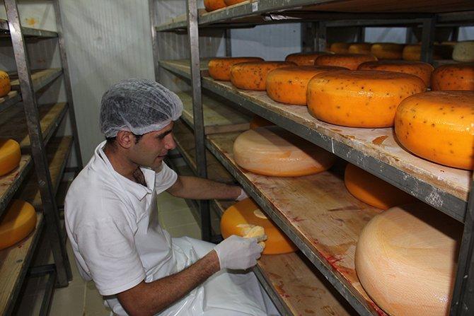yilmaz-sezer-peynir.jpg