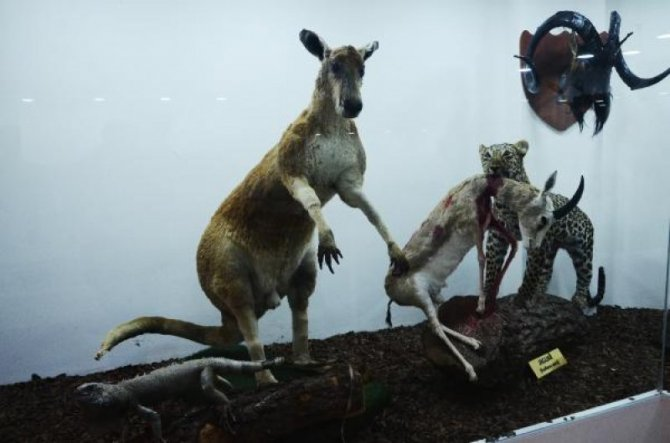 zooloji-muzesi-gaziantep-006.jpg