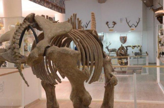 zooloji-muzesi-gaziantep-010.jpg