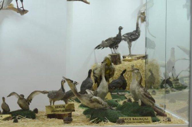 zooloji-muzesi-gaziantep-014.jpg